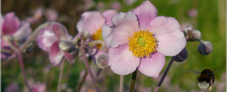 des fleurs aux jardins