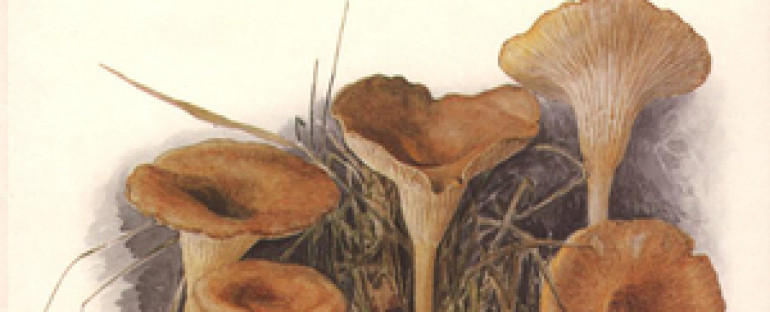 Beatrix Potter, les champignons, et le National Trust.