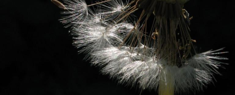 herbier des villes | tawn herbarium