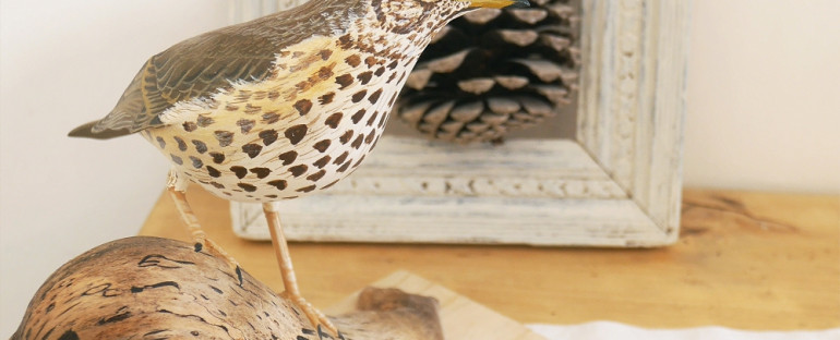 la grive musicienne   the song thrush