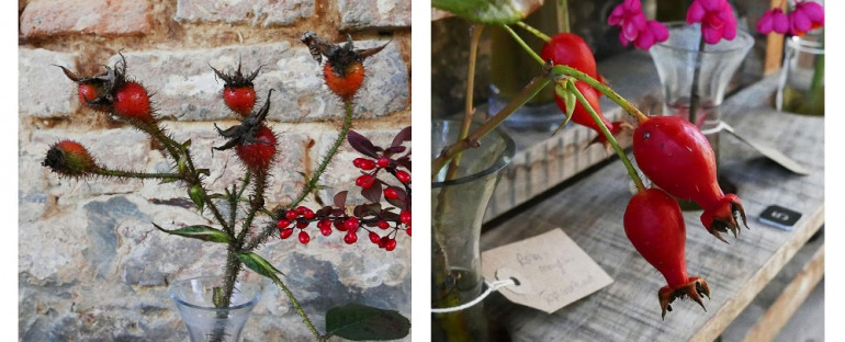 « Rosehips offering vibrant colour to the winter garden »