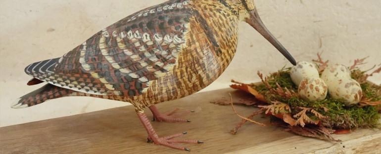 la bécasse des bois | the eurasian woodcock