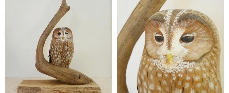 the tawny owl | la chouette hulotte