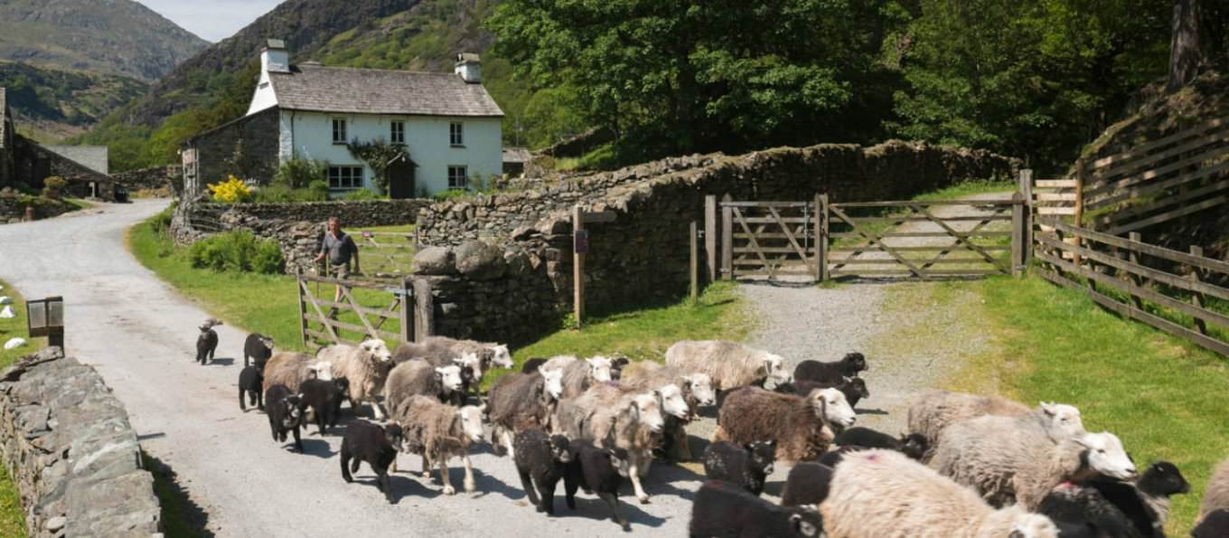 Yew Tree Farm near Coniston was part of Beatrix Potter's legacy to the National Trust