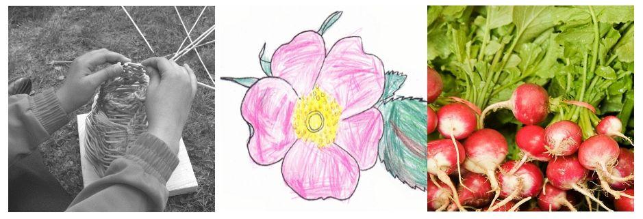 au jardin, un nichoir à moineau, le pastel de l'églantier et une botte de radis