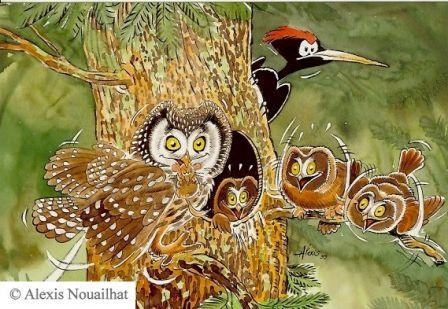 Famille de Chouettes de Tengmalm, cartes postales Rapaces