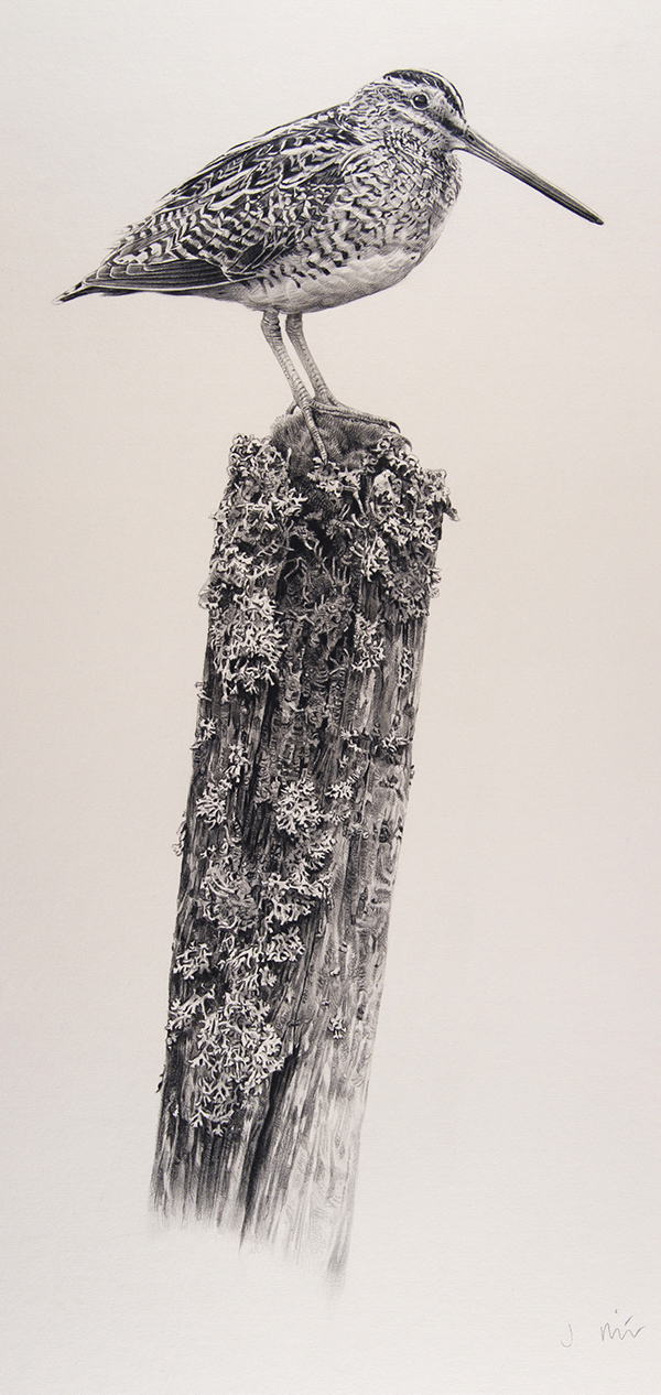 Jonathan Pointer, 'Snipe on post' - 23 x 47cm