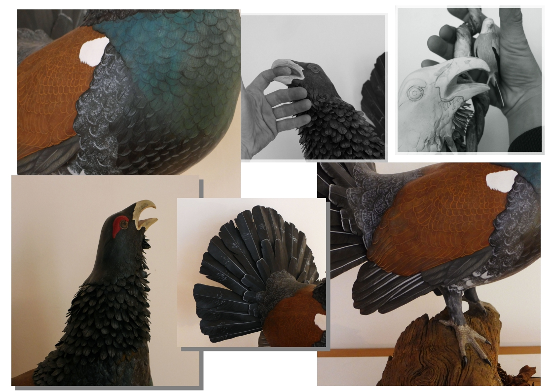 The Capercaillie | le Grand Tétras
