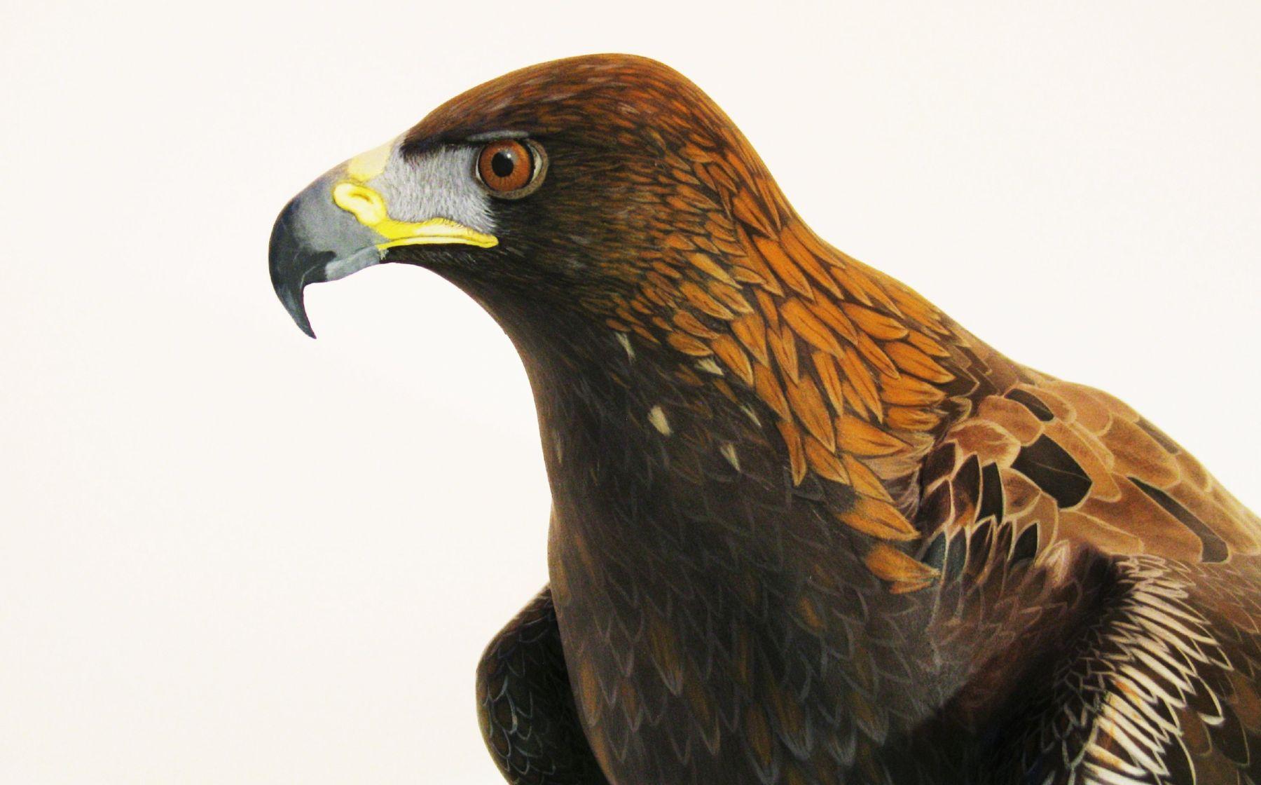 l'aigle royal, the golden eagle, sculpture