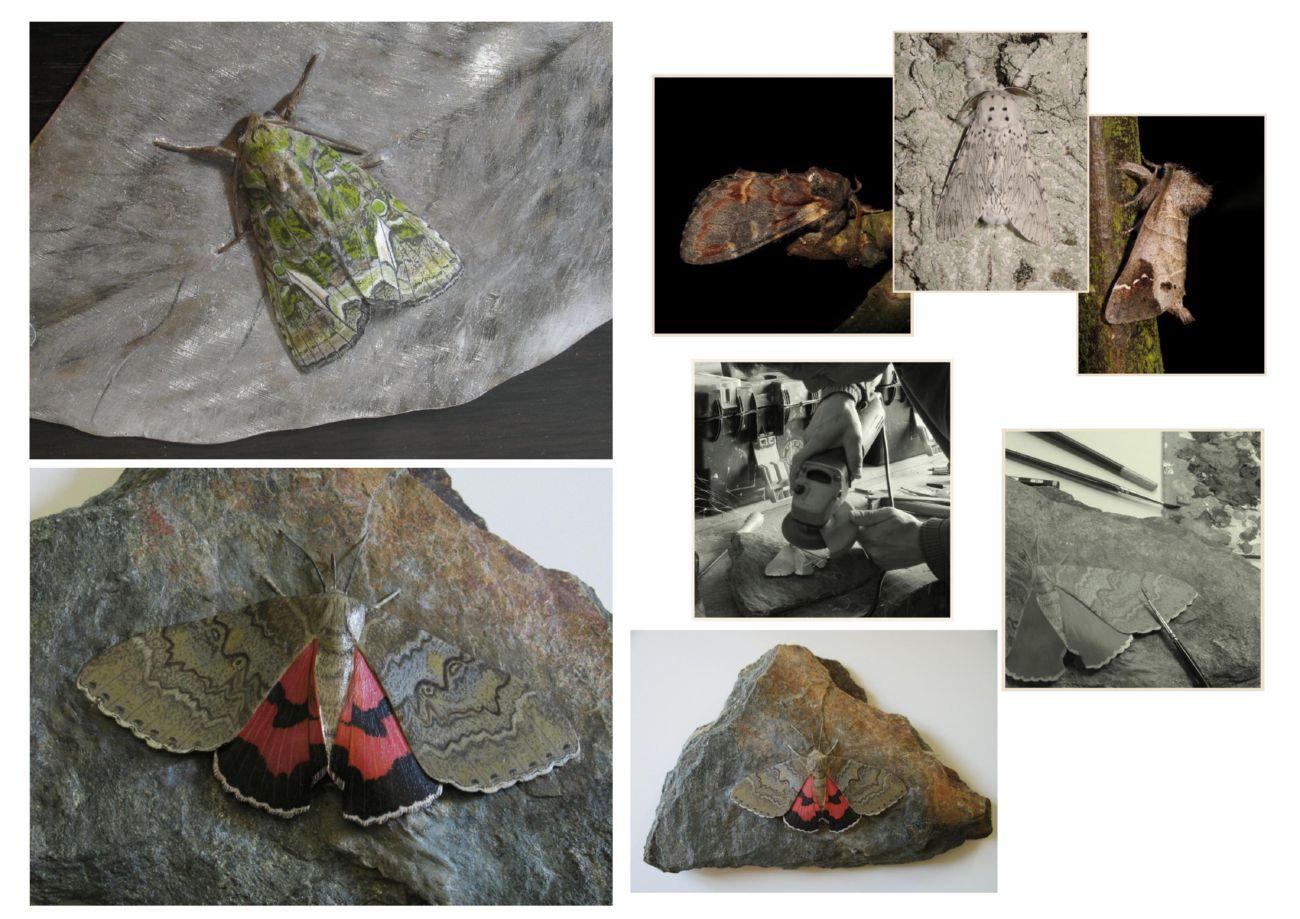 Une Noctuelle de l'Arroche, an Aroche moth, une Lichénée rouge; a red Underwing, sculptures.