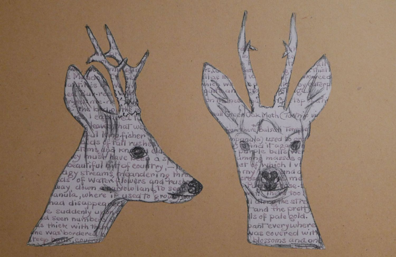 chevreuils, roe deers