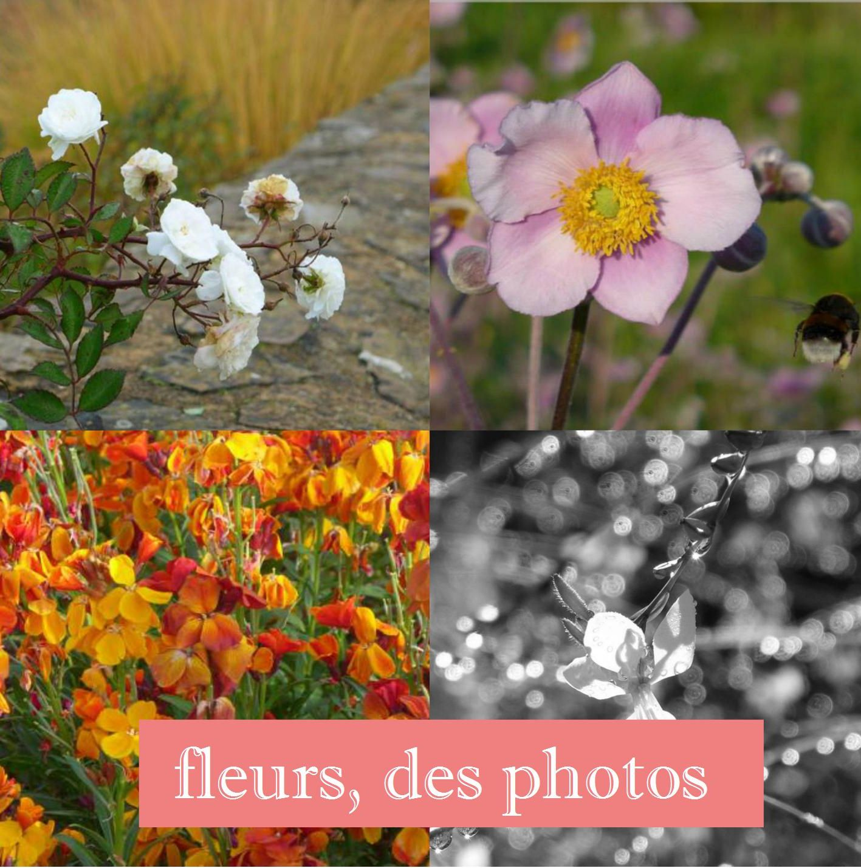 fleurs, des photos