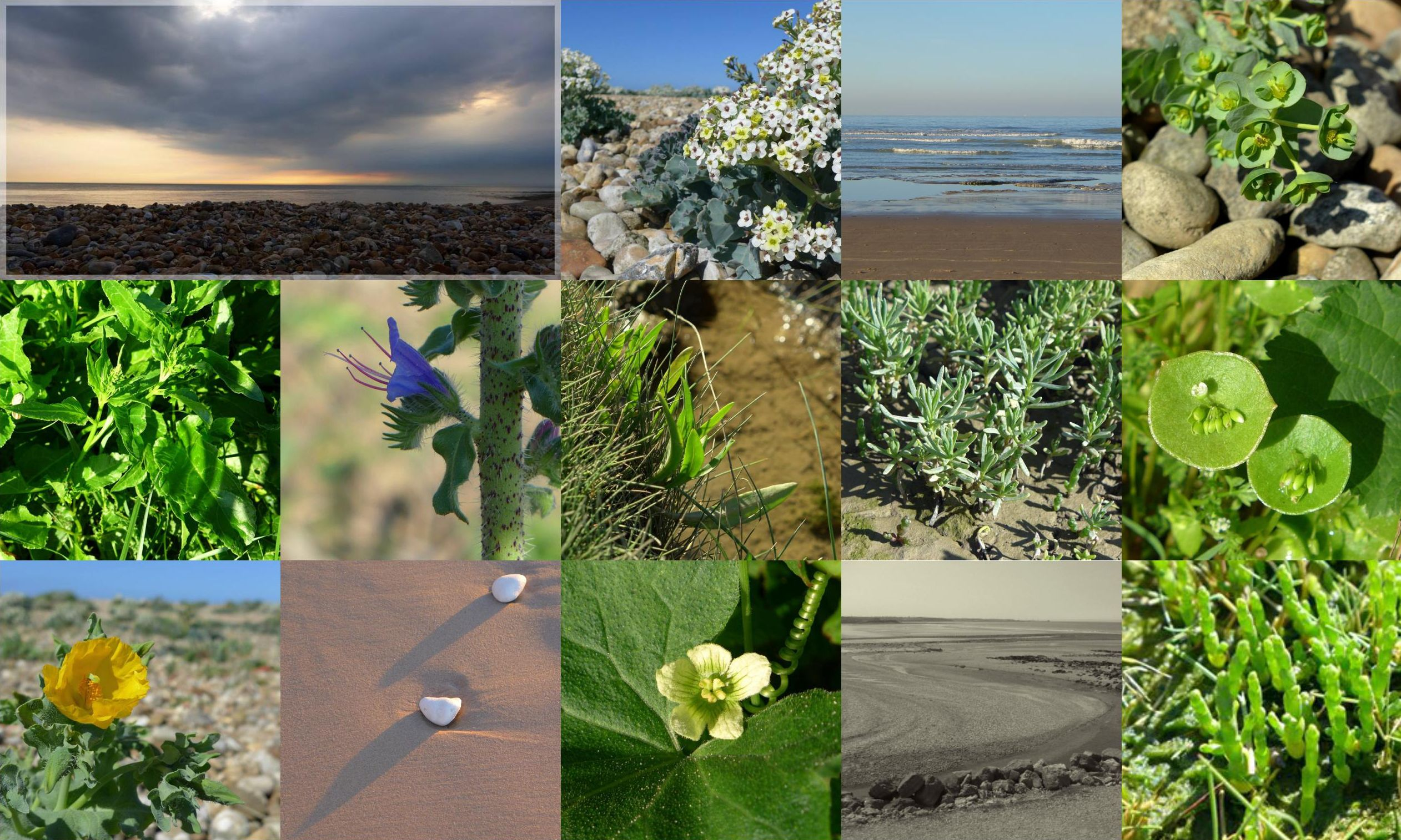 flore et paysage de l'estuaire de la slack, flora and lanscapes of the Slack estuary,photo éric