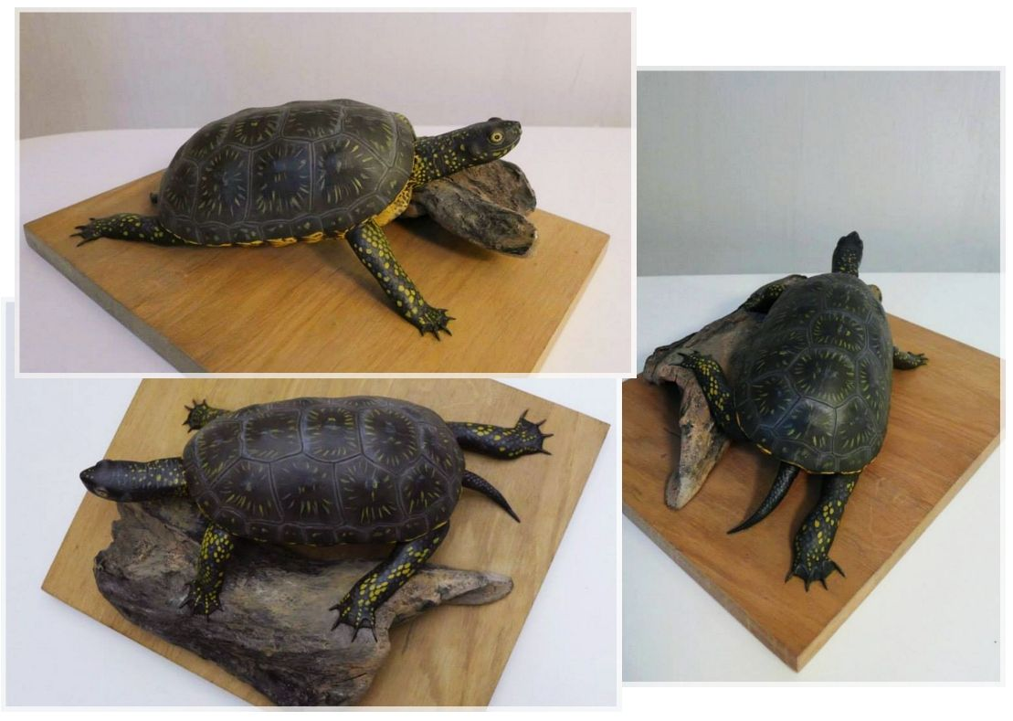 la cistude d'europe, the pond turtle, sculpture