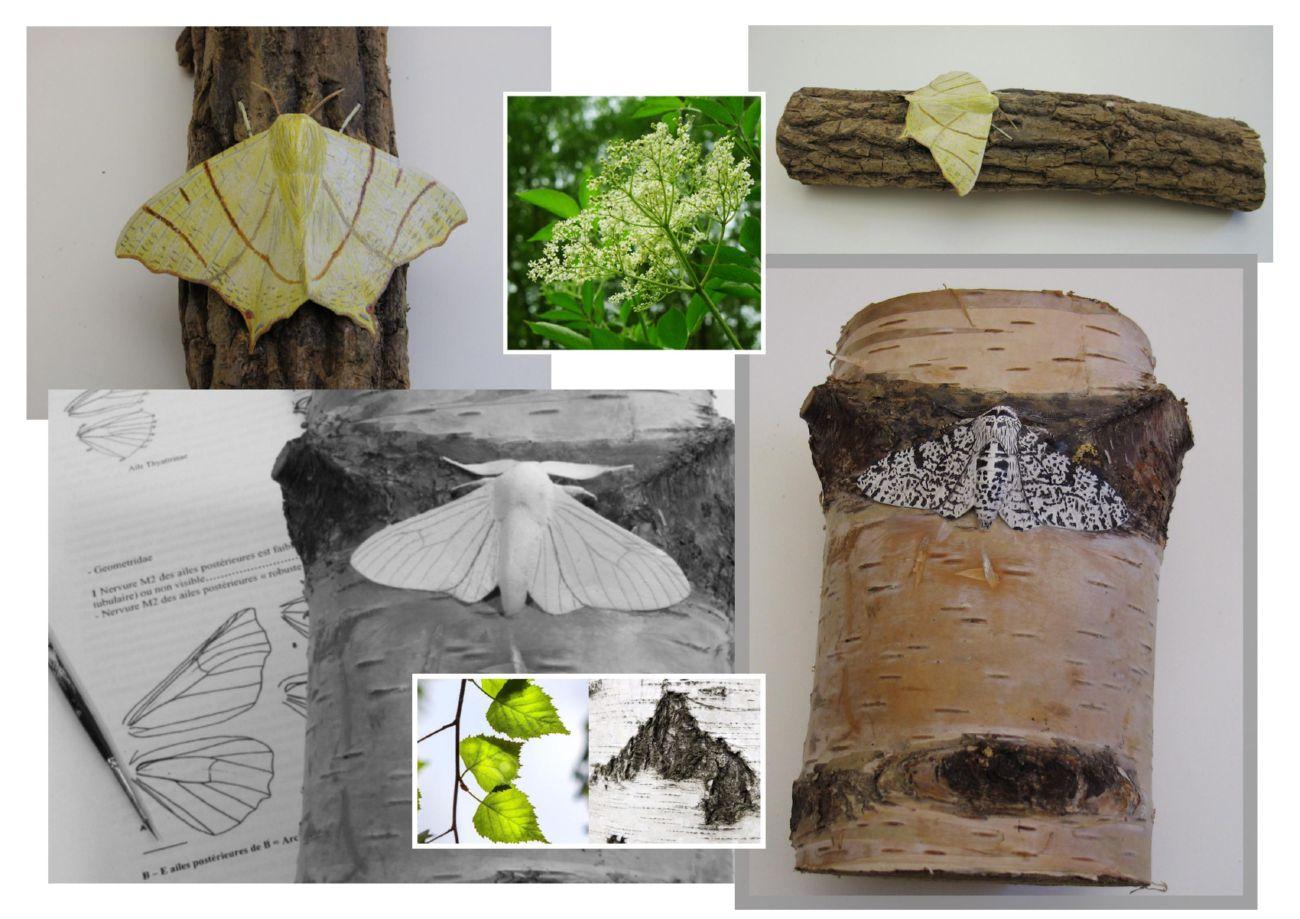Une Phalène du Sureau, a Swallow-tailed moth, une Phalène du Bouleau, a Peppered moth, sculptures.