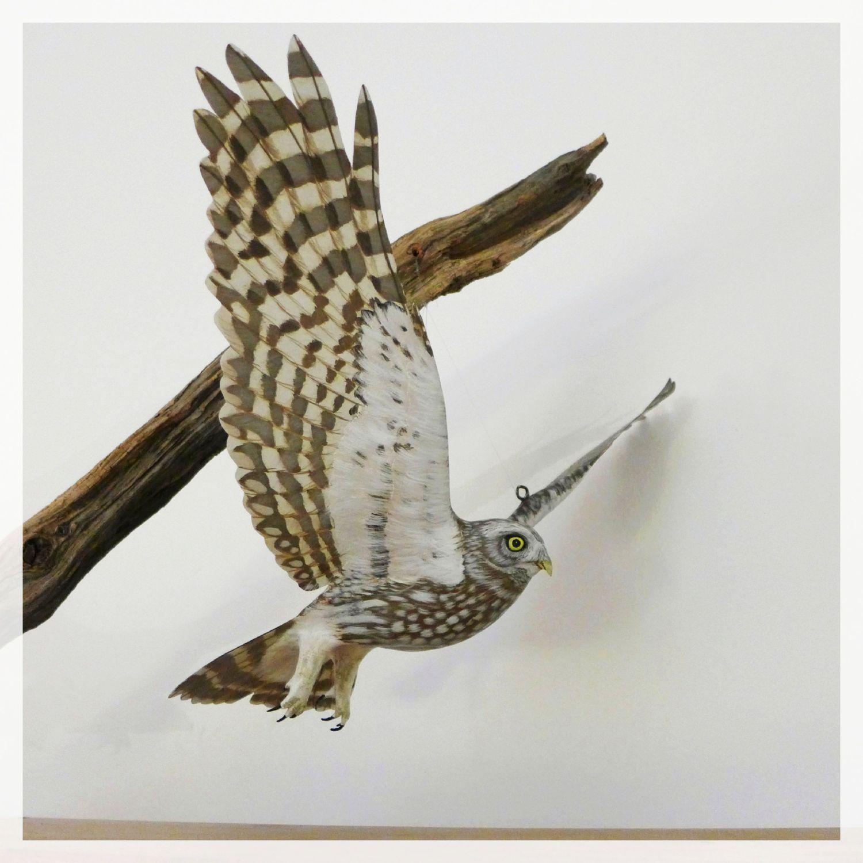 une chevêche, a little owl, sculpture