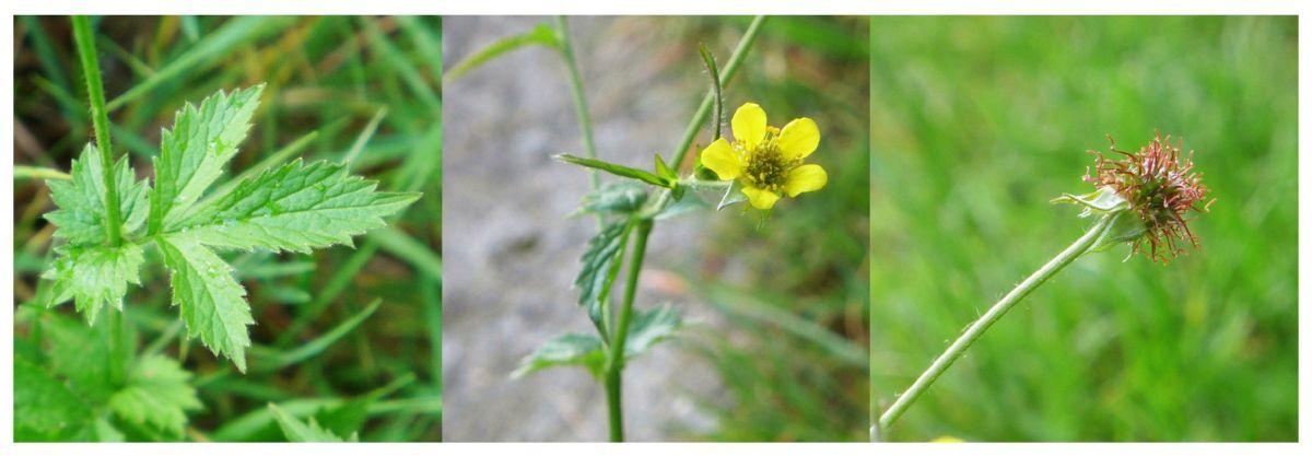 eric billion herbier