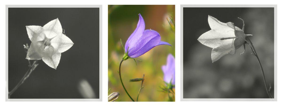 eric billion flore