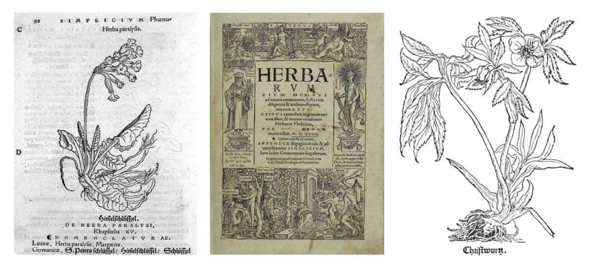 Otto Brunfels. Herbarium vivae icones. Jean Schott. 1530. Strasbourg.
