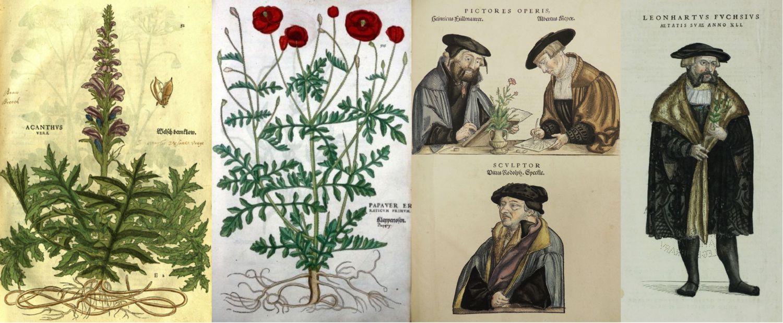 histoire illustration botanique Leonart Fuchs, Albrecht Meyer, Heinrich Füllmaurer, Veit Rudolf Speckle.