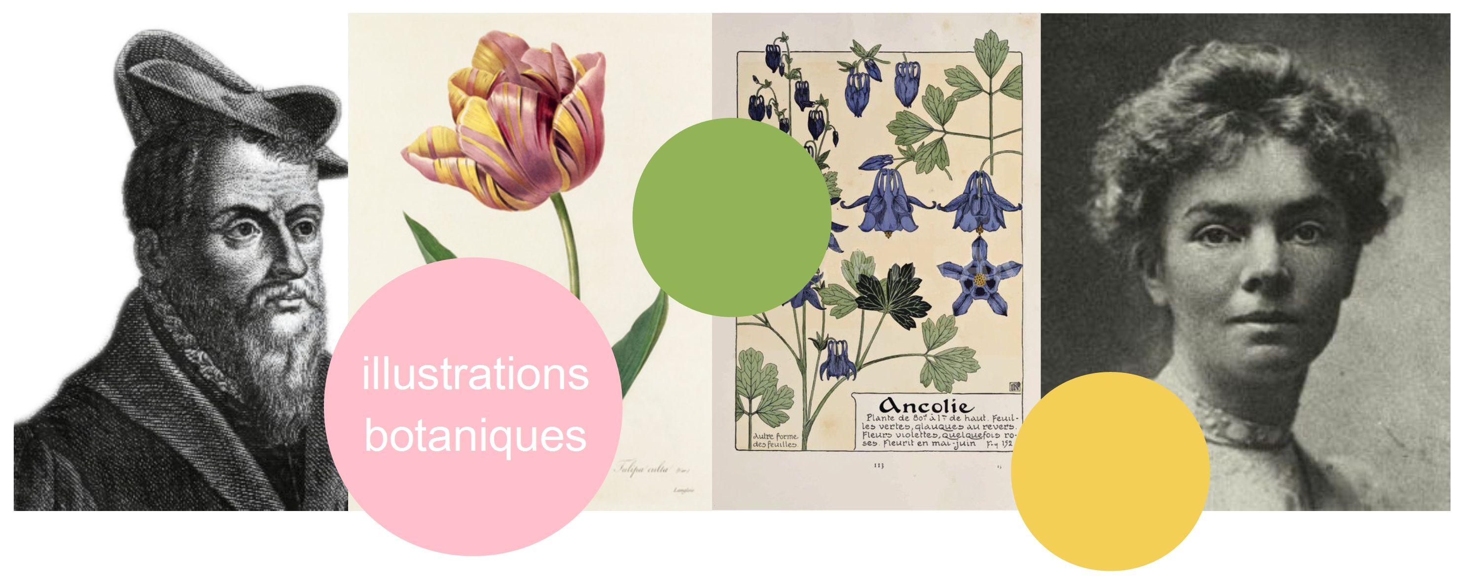eric billion sculpteur histoire illustration botanique