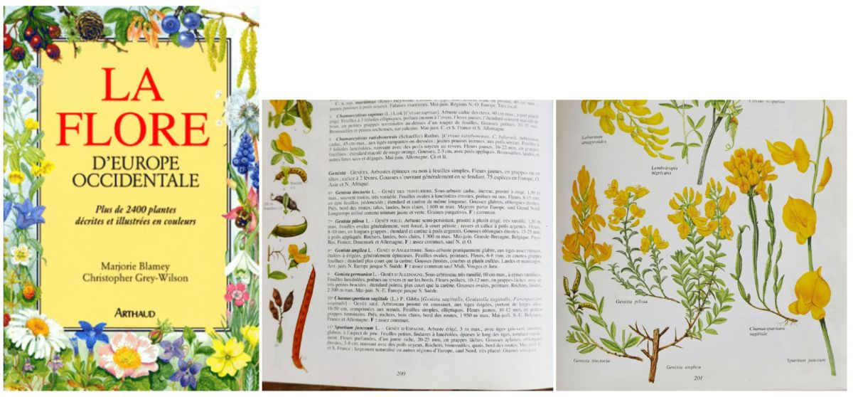 Marjorie Blamey.Christopher Grey-Wilson. La flore d'Europe occidentale. Genista. Arthaud. 1991.