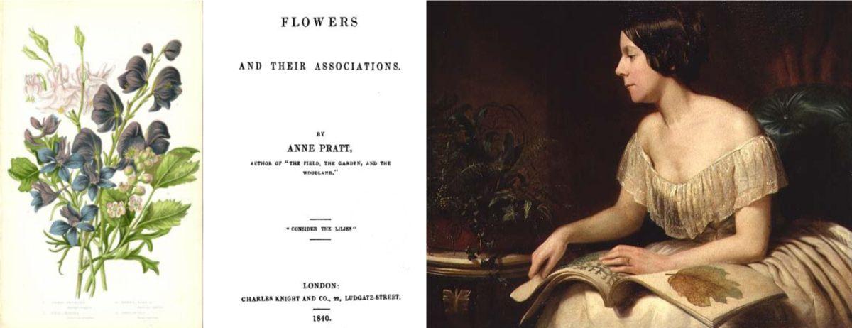 Anne Pratt