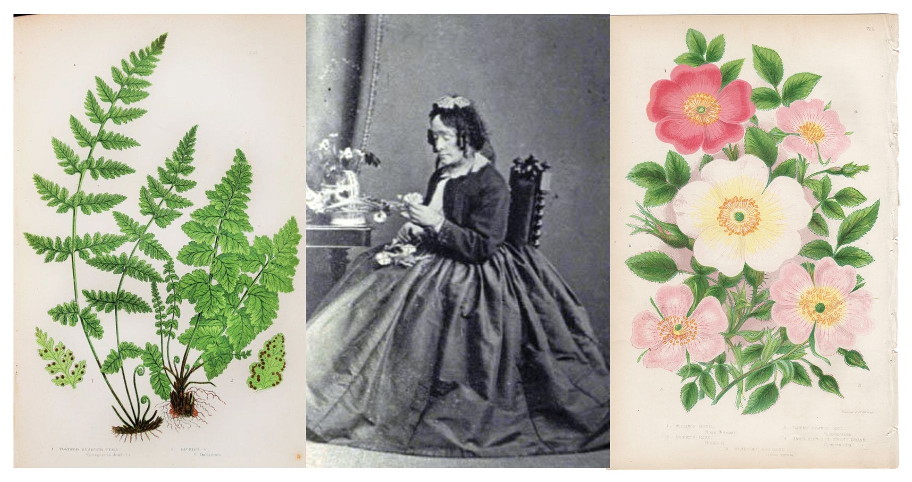 eric billion sculpteur histoire illustration botanique Anne Pratt