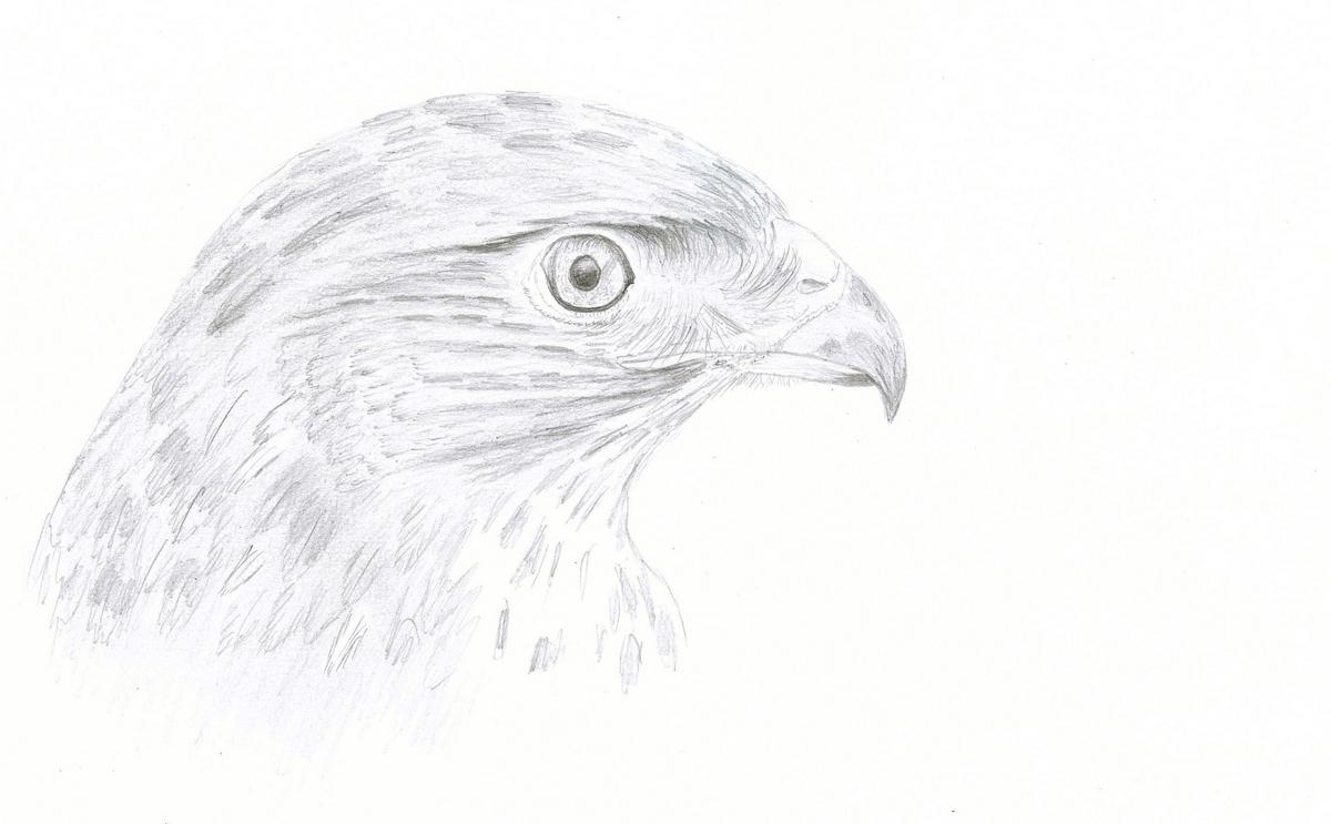 le regard, dessin d'étude, graphite
