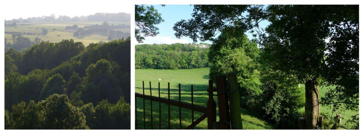 paysage de juin