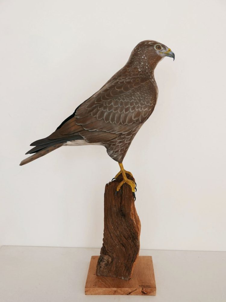 la buse variable the buzzard sculpture eric billion