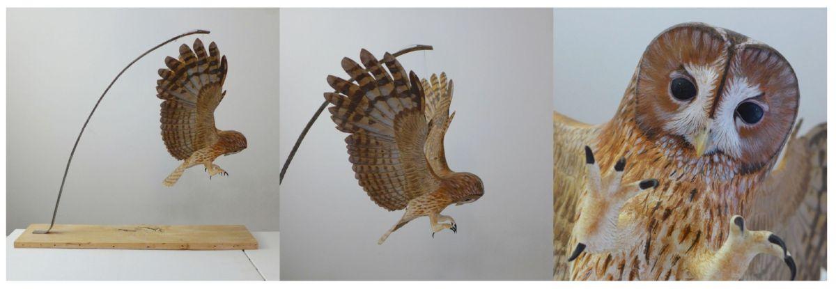 la Chouette hulotte| the tawny Owl | envergure| wingspan 100 cm