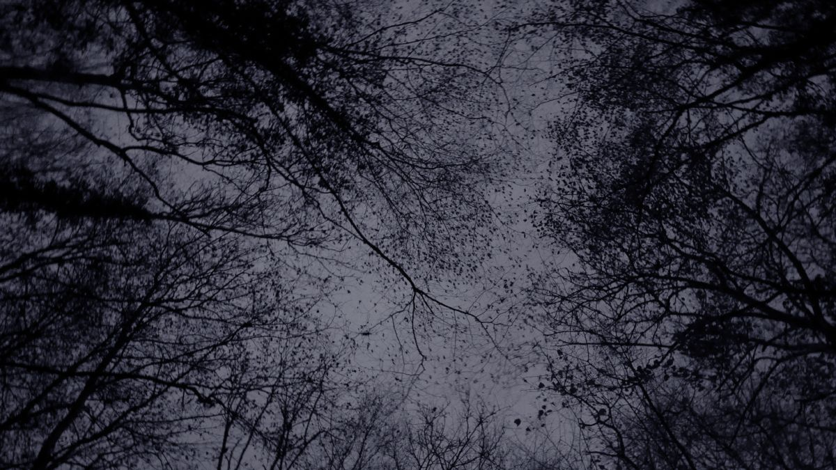 les hêtres, la chouette hulotte et la bécasse des bois