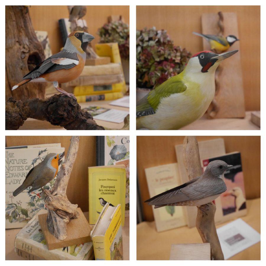 portraits d'oiseaux| birds portraits