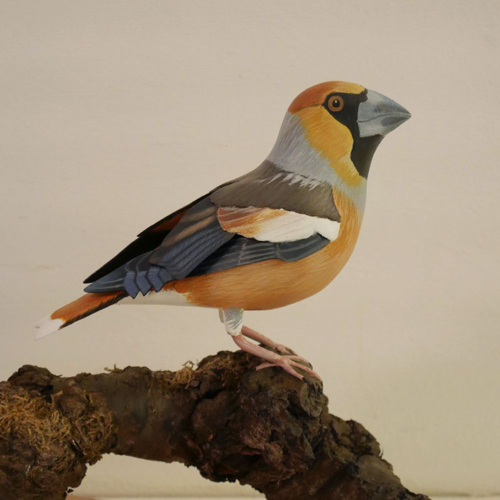 le gros-bec casse-noyaux, the hawfinch, sculpture