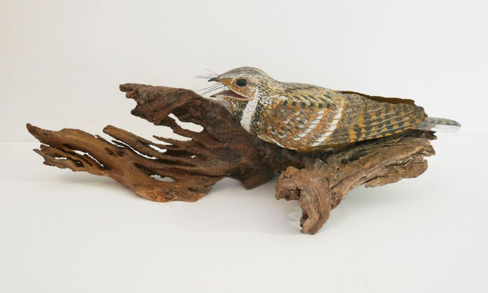 The Eastern whip-poor-will | l'Engoulevent bois-pourri, sculpture