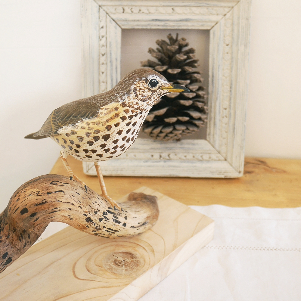 The Song Thrush   la Grive musicienne, 22 cm