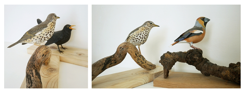 The Song Thrush | la Grive musicienne, 22 cm