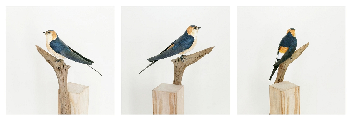 The red rumped Swallow| l'Hirondelle rousseline, sculpture