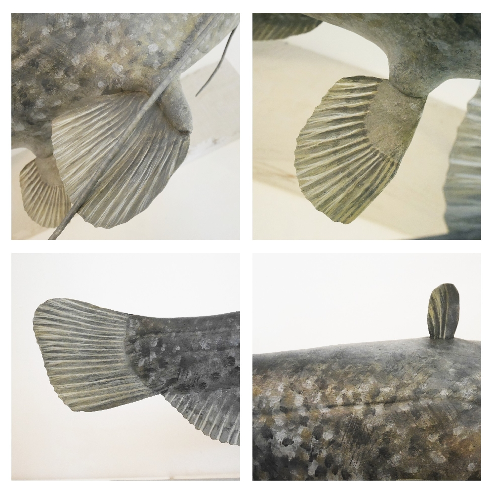 The wels Catfish   le Silure glane