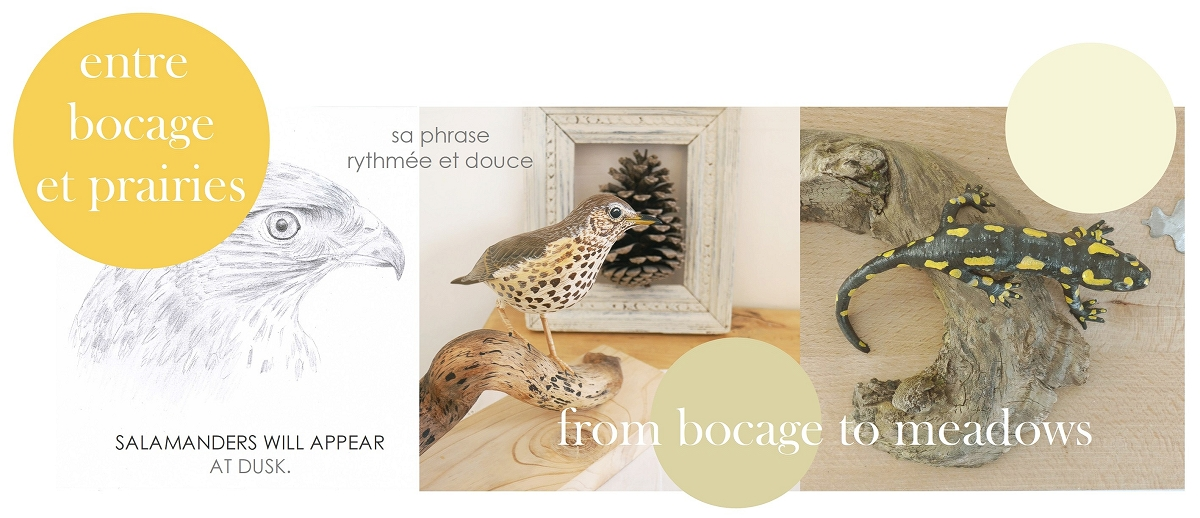 entre bocage et prairies | from bocage to meadows