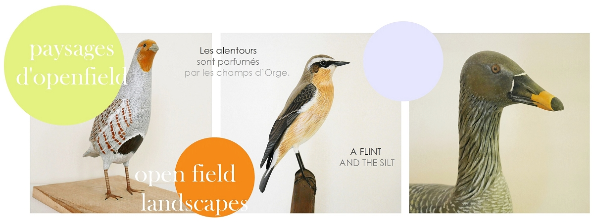 paysages d'openfield | open field landscapes