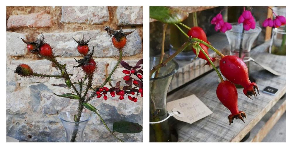 Rosa centifolia muscosa 'Henri Martin', Rosa moyesii. At Sissinghurst.