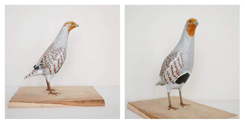 The grey Partridge |la Perdrix grise, 28 cm