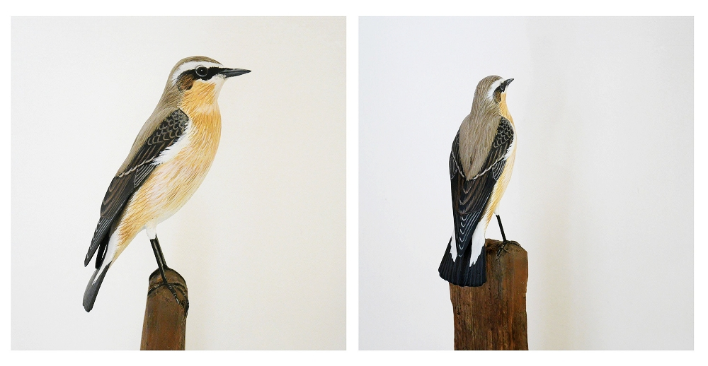 The northern Wheatear | le Traquet motteux, 16 cm