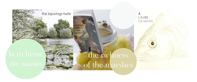 la richesse des marais   the richness of the marshes