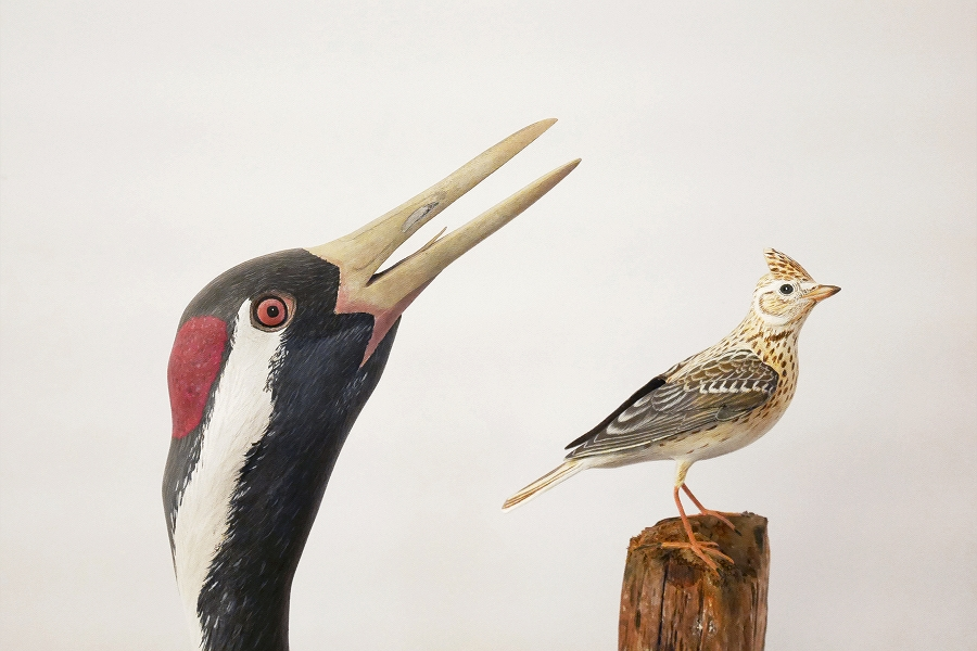 The Skylark and the Crane |l'Alouette et la Grue