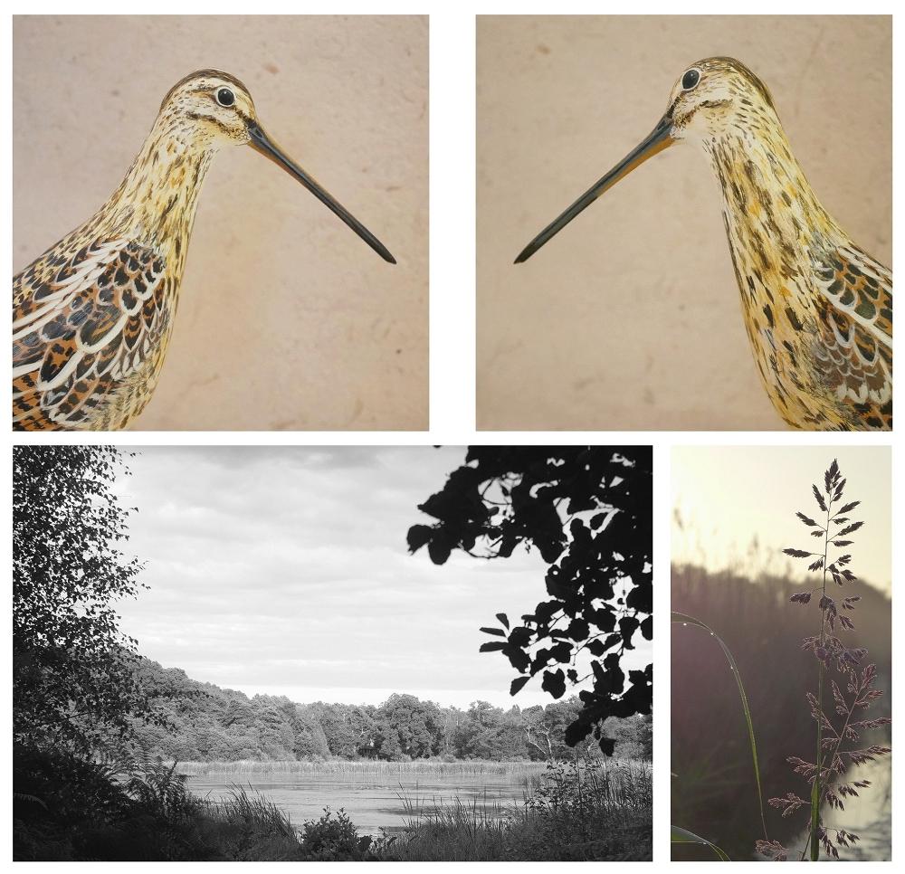 the common snipe | la bécassine des marais, 26 cm