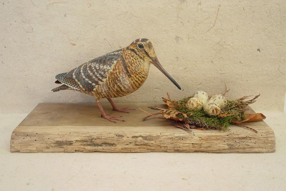 the eurasian woodcock | la bécasse des bois, 30 cm
